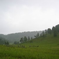 Алтайский край :: Николай