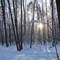 Зимний лес :: Лидия (naum.lidiya)