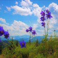 Цветы синегорья :: Сергей Чиняев
