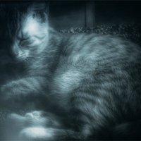 В тиши полудрёмы... :: Вера Катан