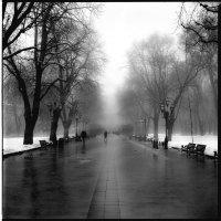 Winter alley :: alexander zvir