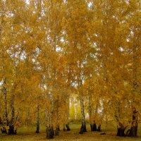Золотая осень :: Светлана