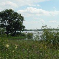 У  реки Волхов.... :: Светлана Z.
