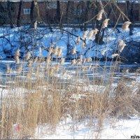 Солнечным февральским днём в городском парке... :: Нина Бутко