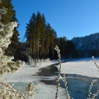 Морозным днём. :: Валерий Медведев