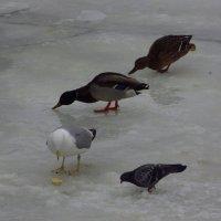 Птички божии не знают ни заботы, ни труда :: Андрей Лукьянов