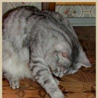 Кот и живая рыба :: OLLES