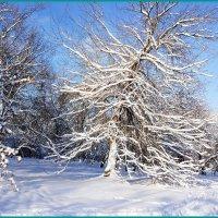 Красота зимнего дня... :: Николай Дони