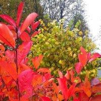 Осень :: Вера (makivera)