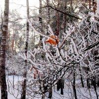 ветки в зиме :: Александр Прокудин