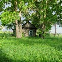 На лужайке... :: Светлана Рябова-Шатунова