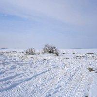 Ушаковский залив, скованный льдом :: Маргарита Батырева