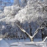 После снегопада :: Ирина Via
