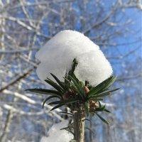 Снежный бутон :: Ирина Via