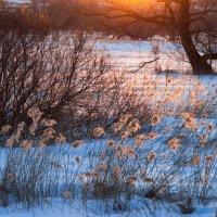 Свет вечернего солнца :: Вера Сафонова
