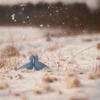 Зимнее воркование :: ARFoto Astahova