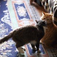 Коты дружат :: Николай Холопов