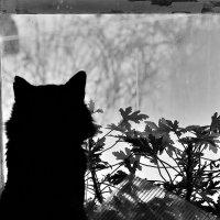 waiting for the Sun :: Бармалей ин юэй