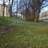 Весна уже в городе...Аугсбург.... :: Galina Dzubina