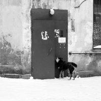 Собака, снег, ситцевая занавеска и угол дома :: Татьяна [Sumtime]