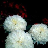 Цветочный зефир :: Елена Бушуева