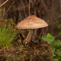 Осень :: ARFoto Astahova