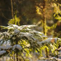 Снег в лесу :: ARFoto Astahova