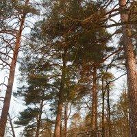 Nature :: Ася Якушевич