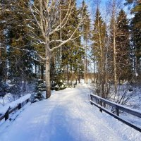 Зимняя дорога :: Сергей Беличев