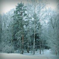 Сказка зимы :: Попкова Александра
