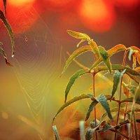 Солнце встаёт. :: Алексей Хаустов