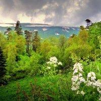 Адыгея, плато Лаго-Наки. :: Игорь