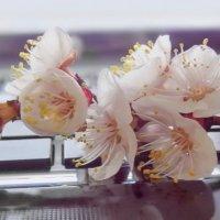 Дарю весну друзьям своим ... Дарю её цветенье! :: Людмила Богданова (Скачко)