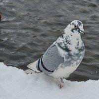 Голуби,голуби...... :: Paparazzi