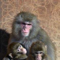 Семейный портрет :: mv12345 элиан