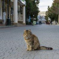 Крымский кот в ожидании сезона 2018. :: Павел © Смирнов