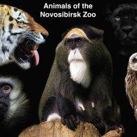 Коллаж. Животные Новосибирского зоопарка :: Владимир Шадрин