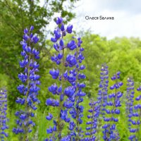 цветы :: Олеся Б