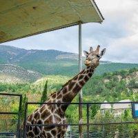 Зоопарк Сказка. Ялта. :: Павел © Смирнов