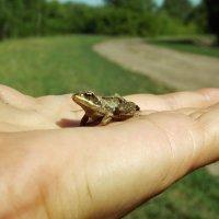Царевна лягушка :: Светлана Рябова-Шатунова