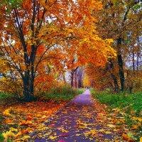 Осенние краски :: Александр Шишин
