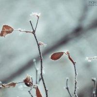 Немного зимы в марте :: Маргарита Б.