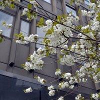 А в городе весна... :: Ольга