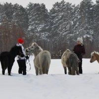 Прогулка с лошадьми :: Ольга Слободянюк