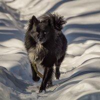 Пёс :: Андрей Дворников