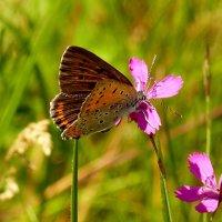 крылатые цветы 1 :: Александр Прокудин