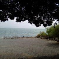 Израиль. Галилейское море. :: София