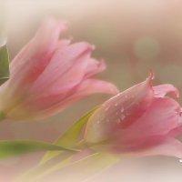 Чудо-Весна :: Lusi Almaz
