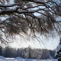 для Москвы - зима крассотка 02 :: Kriss Ампар