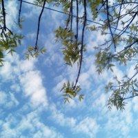 Весеннее небо :: Лада Замараева